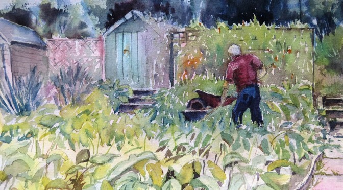August: Paddock Allotments (Clare Weatherill)